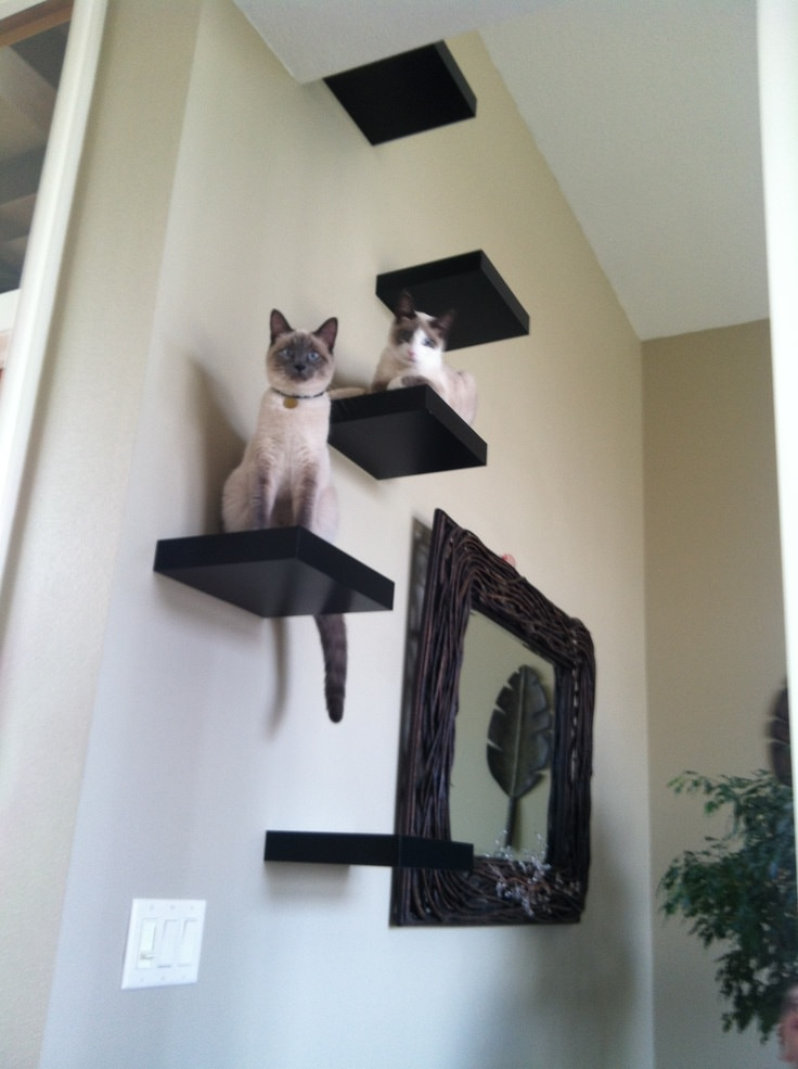 Creating a cat sanctuary at home - Kletterwand katze ...