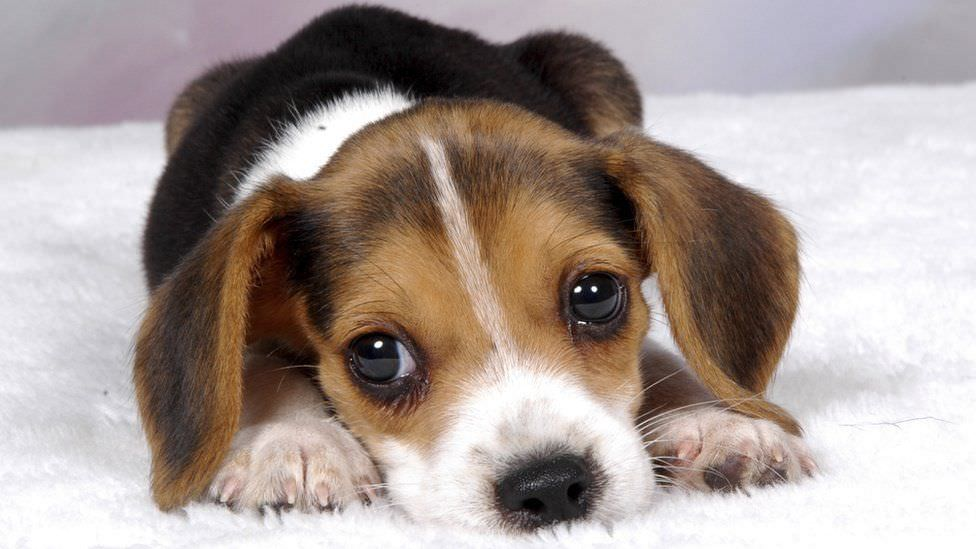 Getting a Puppy? Don't Make These Common Mistakes!